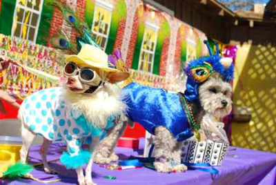 Doggie Gras - Mardi Paws King and Queen